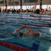 Udane starty pływaków Delfina