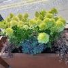 Zielone przystanki, łąki kwietne